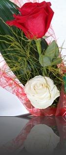 roses_Sant Jordi