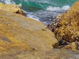 Cangrejos en la roca _Salou-
