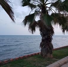 Sitges palmeras